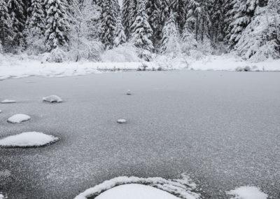 Tourbière sous la neige