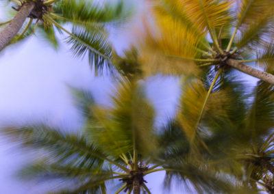 Palmes de cocotier dans le vent
