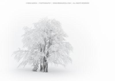 2012-01-08__D3S6212_1000px
