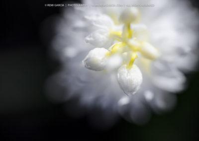 2012_05_08__DSC5864_1000px